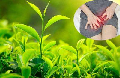 trà xanh trị bệnh phụ khoa